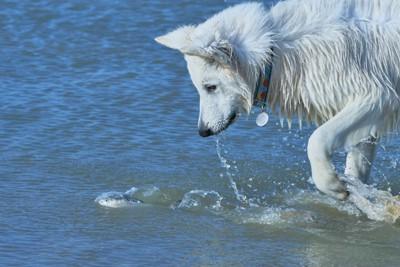 魚を追いかけている犬