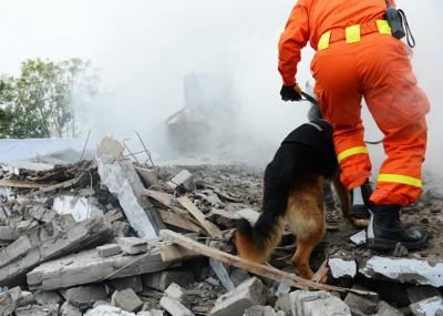 災害現場のレスキュー隊と犬
