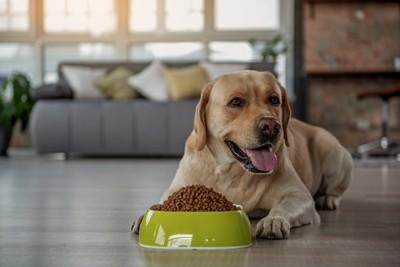大盛りのご飯の前で伏せている犬