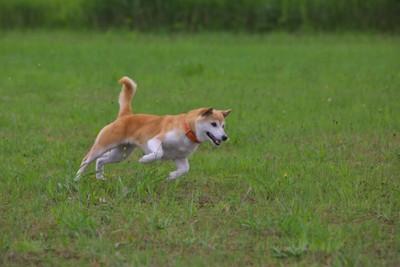 元気に遊ぶ犬