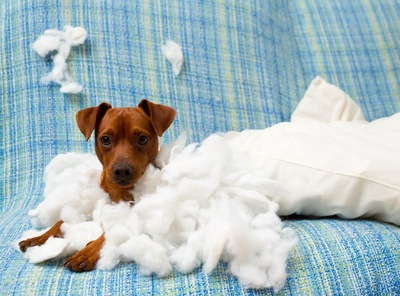 綿を散らかす子犬