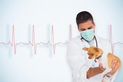 獣医師に抱かれたチワワと心電図