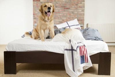 ベッドの上に座る犬