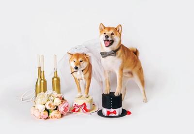BRIDE柴犬