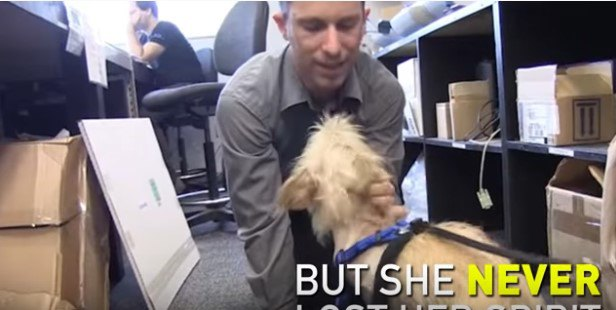 四つん這いで犬とたわむれる男性