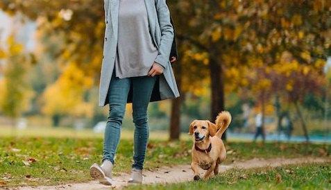 紅葉の中を飼い主と散歩する犬
