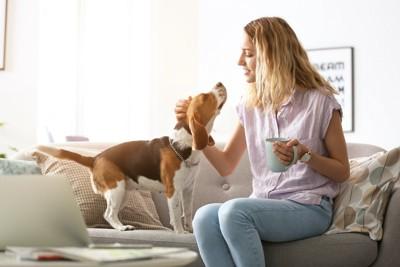 カップを持ちながら犬と触れ合う女性