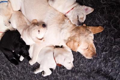 母犬と兄弟犬