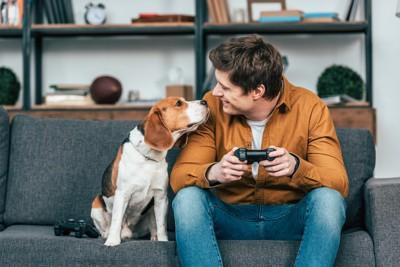 ソファーで顔を近付け合うビーグル犬と男性