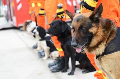 任務に就く犬たち
