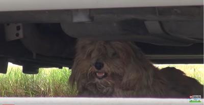 車の下にいる犬