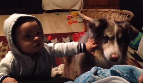赤ちゃんに叩かれる犬