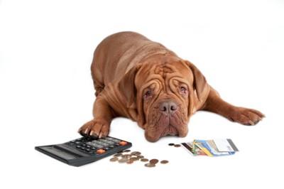床に置かれたお金と電卓のそばで伏せる犬