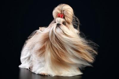 ロングヘアの犬