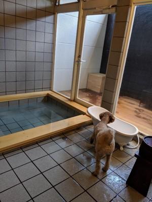 お風呂を見つめる犬