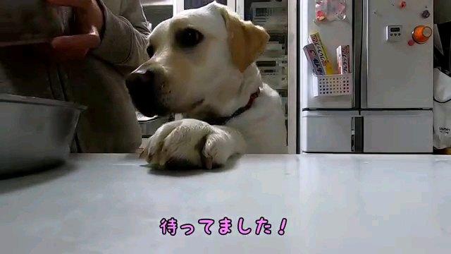 待ってました!~字幕