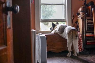 窓から外を見ている犬の後ろ姿