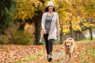 紅葉の中を歩く犬