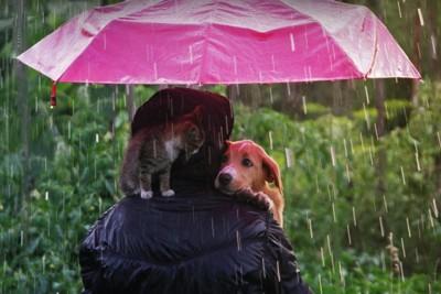 1つの傘で雨をしのぐ犬と猫と人