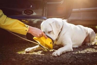 携帯用ボウルで水を飲んでいる犬