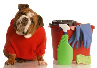 掃除道具を前に首をかしげる犬