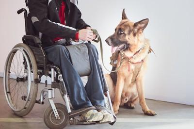 車椅子の人と介助犬のGシェパード