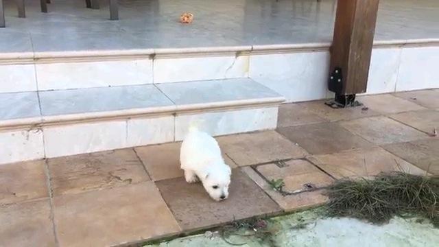 正面向きの子犬