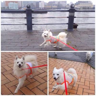 海をバックにを散歩する犬