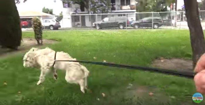 跳びはねる犬