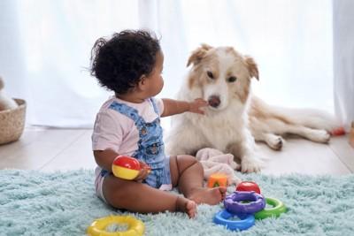 おもちゃで遊ぶ赤ちゃんに寄り添う犬