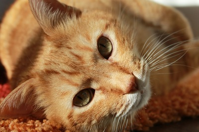 dogcat6