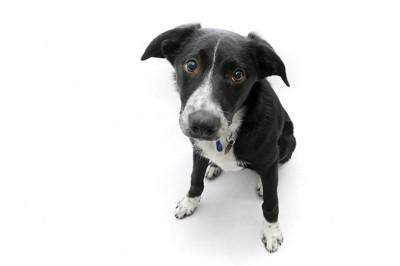 悲しげな表情で座る犬