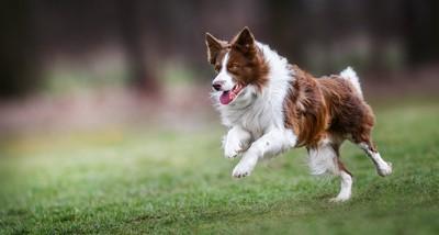 広場で元気よく走っている犬