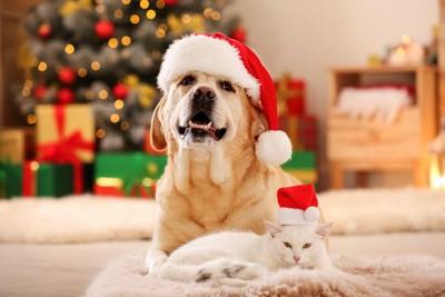 部屋でくつろぐサンタ帽を被ったネコと犬