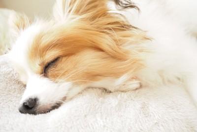 熟睡する犬