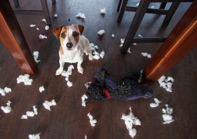 散らかった部屋とこちらを見上げる犬
