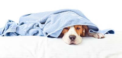 タオルに包まれてる犬
