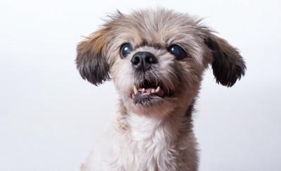「えー」という表情の犬