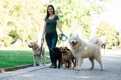 たくさん犬を連れている女性