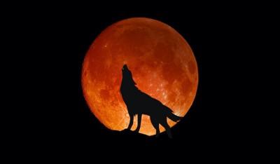 満月と遠吠えするオオカミのシルエット
