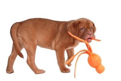 犬とタコのオモチャ