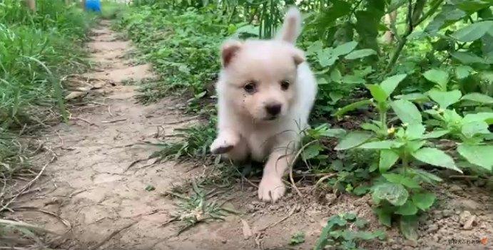 片足を上げる子犬