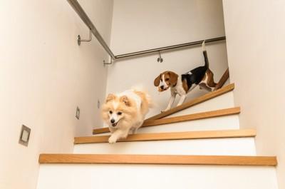 階段を下りる2匹の犬