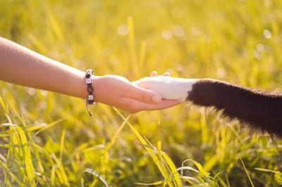 手を繋ぐ犬と人