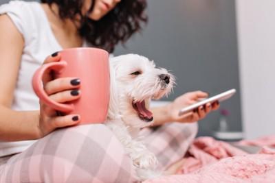 カップを持ってスマホを見る飼い主の膝の上であくびをする犬
