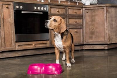 キッチンにいる犬
