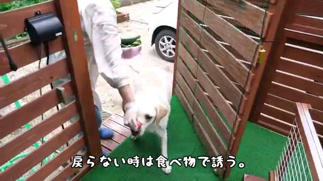 戻らない~字幕