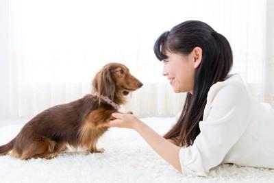 飼い主と見つめあう犬