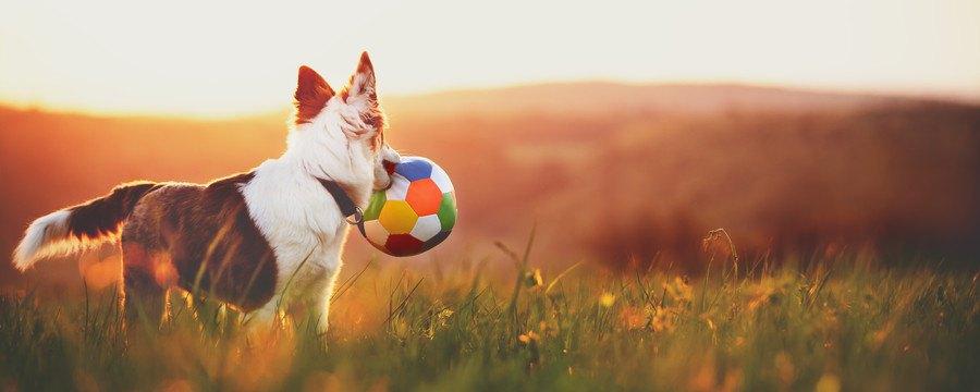 夕方に外で遊ぶ犬