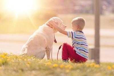道端で犬の頭を撫でてあげる男の子